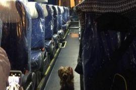 Перевозка людей на автобусе Ford Transit Уфа